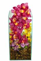 Orquídea Super Luxo