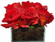 Delicadeza De Rosas Vermelhas