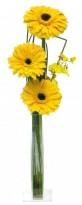 Vidrinho Yellow