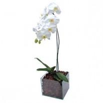 Orquídea Plantada  Branca